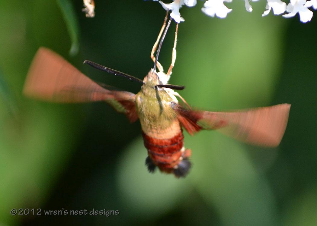 SEO Strategy for humming bird Algo